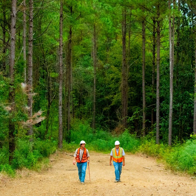 Foresters in working forest, Mississippi