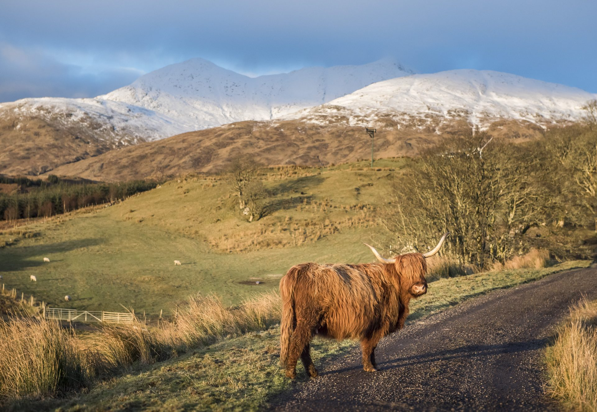 The Highlands around Ben Cruachan are rich with wildlife. Educational information on area's flora and fauna can be explored at the Cruachan Power Station visitor centre.