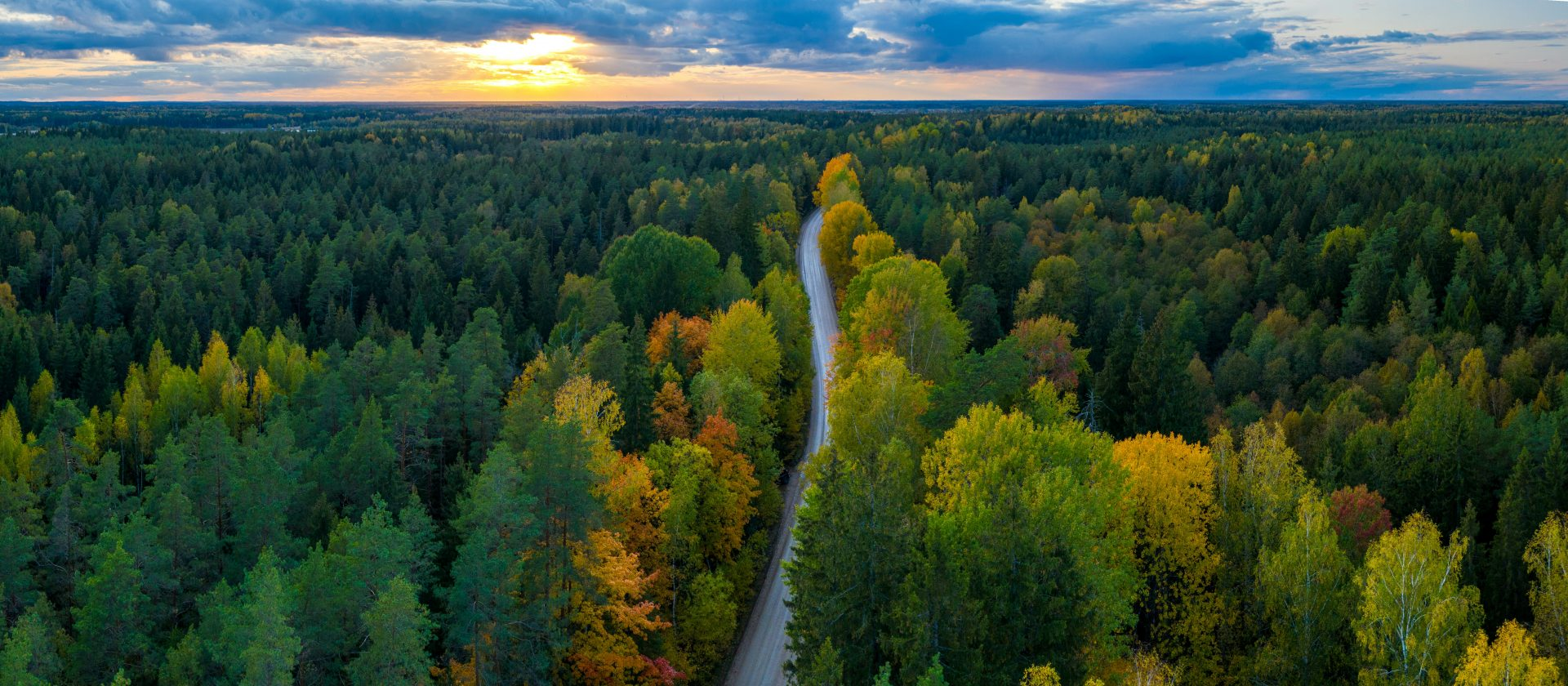 Panorama view of Latvian forest and road from above